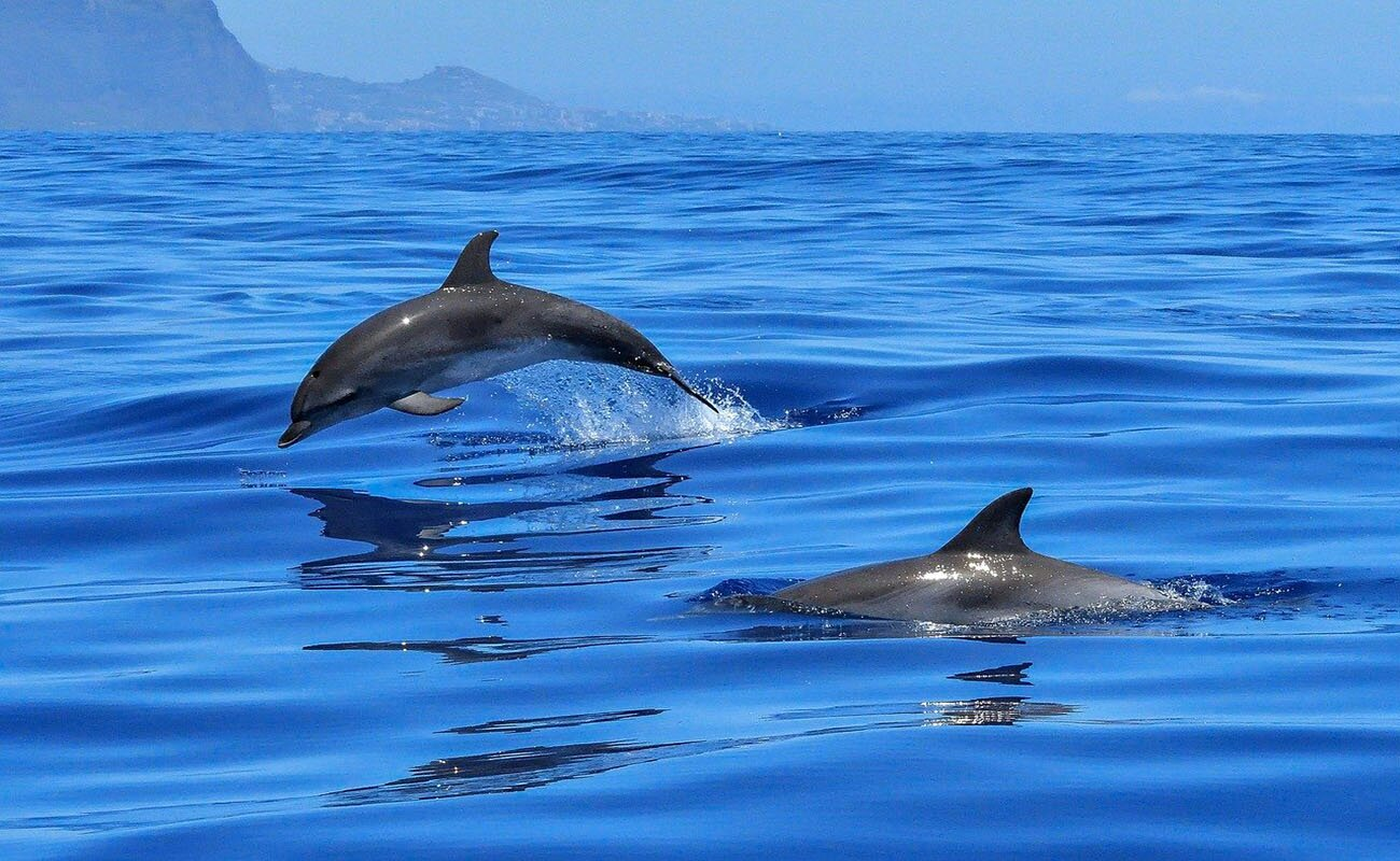 Imbarcazione per dolphin watching